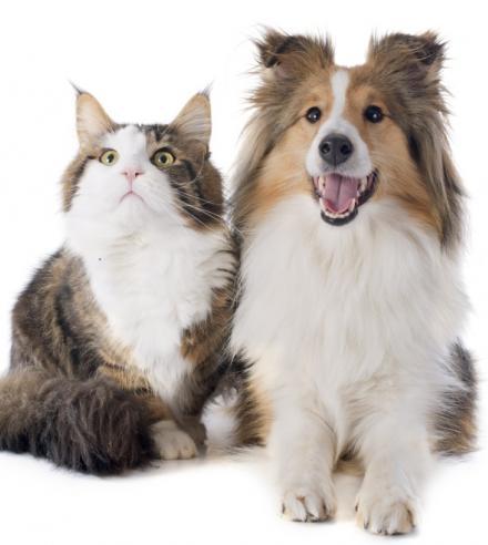 Garderie pour chiens et chats